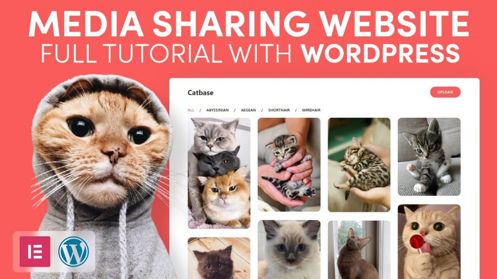How to make a Media Website like Pinterest with WordPress, Elementor and Dynamicooo
